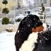 Ewa BB a prvý sneh 1