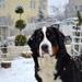 Ewa BB a prvý sneh 2