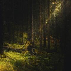 Škótsky čarovný les