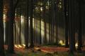 Čarovný les II