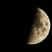 Mr_Moon