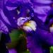 makro kvetu