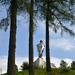 V zajatí stromov