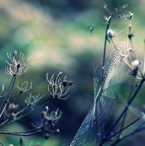 Perličky a siete