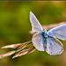 Motýli úlet