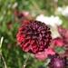 Červené lupene
