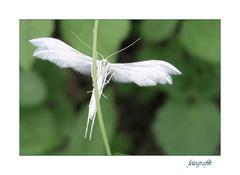 Anjel má biele krídla