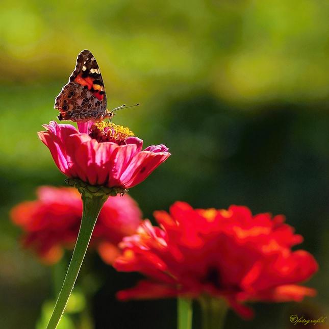 Na záhrade