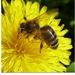 Včielka Maja v máji ...
