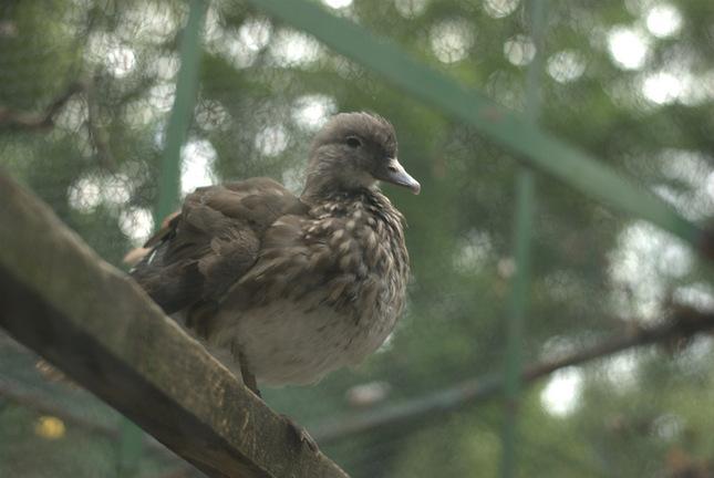 vták v kleci