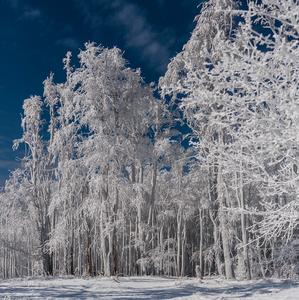SnehoBiela