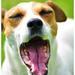 Yawn Please