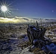 Tatranská spomienka na lesy
