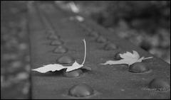 Smutná jeseň