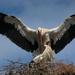 ochranné krídla