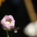 nalet na nektar