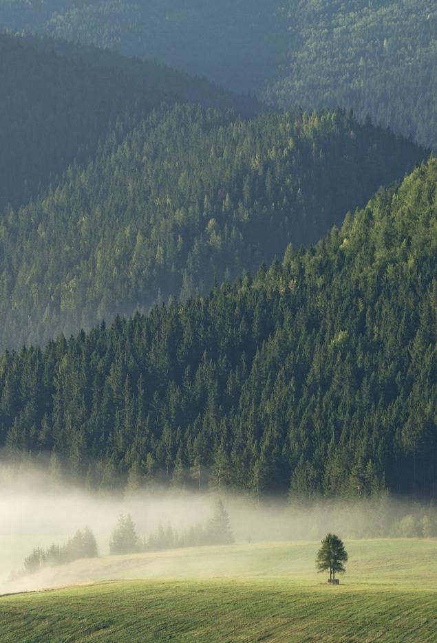 Jedno ráno nad Šumiacom