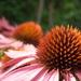 divá kvetinka