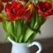 jarné tulipány