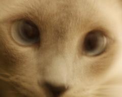 Mačacia impresia