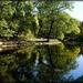 Rybník v parku
