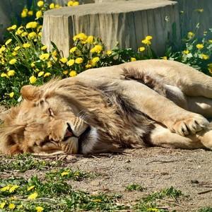 nedeľná siesta