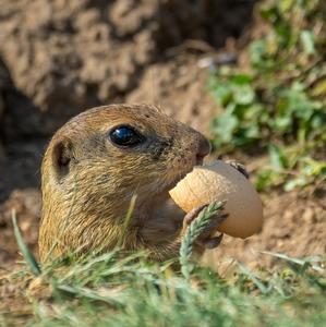 Snídaně v trávě......