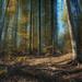 Jesenna cesta lesom