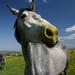 Moje koníky 3