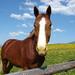 Moje koníky