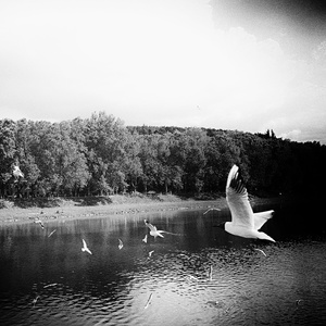 Krajina bielych vtákov