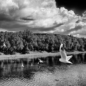 Krajina bielych vtákov II