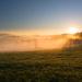 zlata mlha