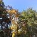 3rozdielne farby stromov