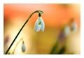 Závan jari