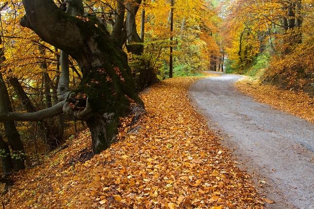 Jeseň vratká, cesta krátka