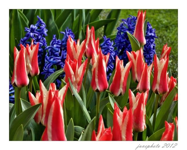 Tulipánová 1