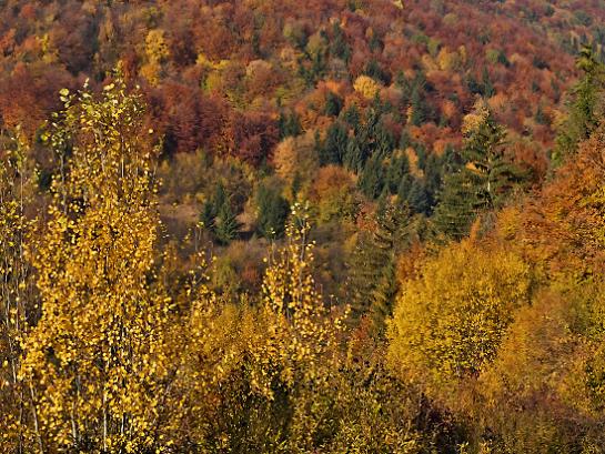 Jesenné farbičky III.