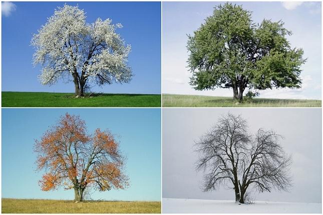 Štyri ročné obdobia