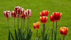 Vôňa jari V.