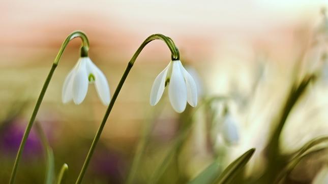 Vôňa jari IV.