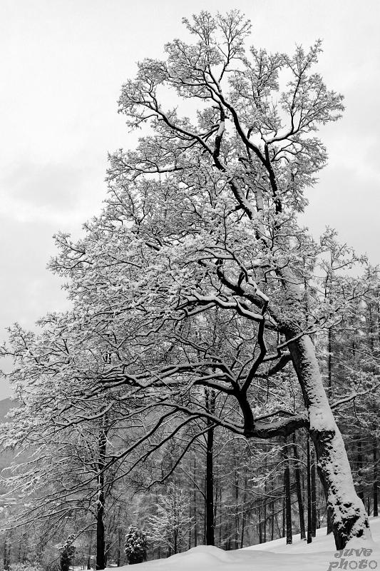 Uprostred zimy