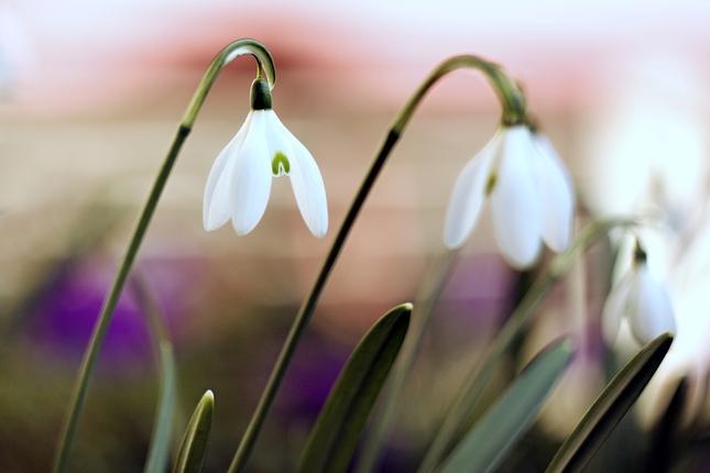 Vôňa jari II.