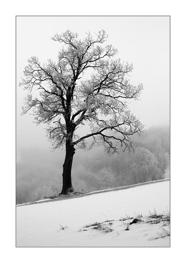 S výhľadom na zimu