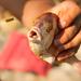 osa vs ryba :)