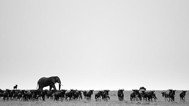 Keď sa povie veľký ako slon.