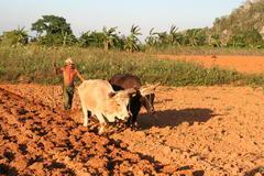 Tazka praca rolnika na Kube