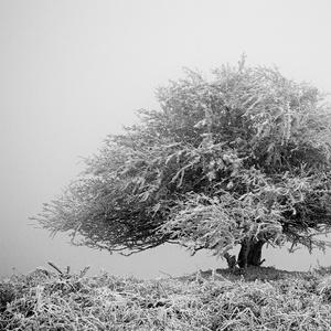 solitér v hmle.....