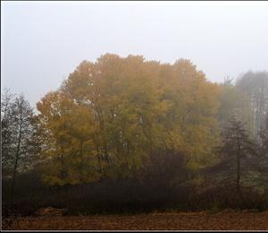 jesenný svet...