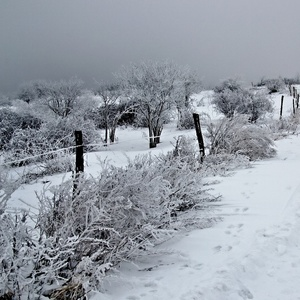 biely január....